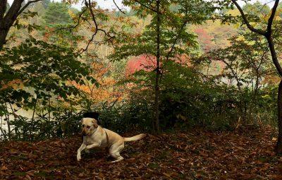10月の紅葉の軽井沢